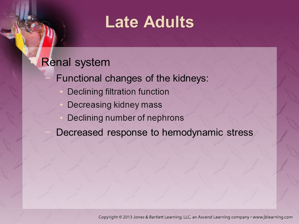Late Adults Renal system −Functional changes of the kidneys: Declining filtration function Decreasing kidney mass Declining number of nephrons −Decrea