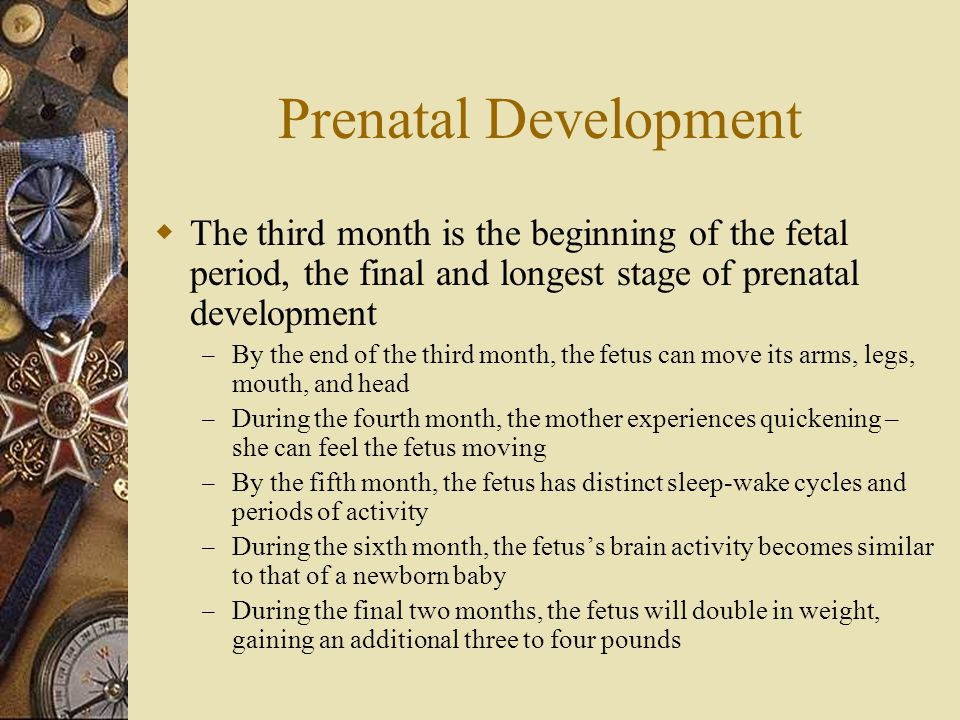 Prenatal Development  The third month is the beginning of the fetal period, the final and longest stage of prenatal development – By the end of the t
