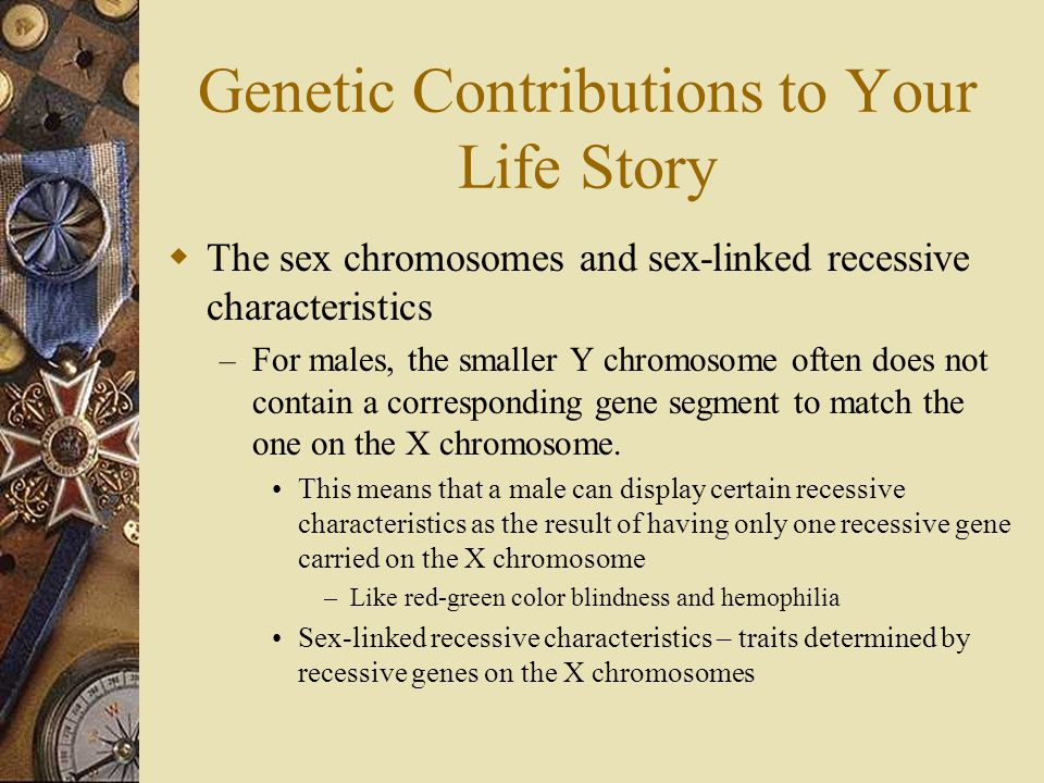 Genetic Contributions to Your Life Story  The sex chromosomes and sex-linked recessive characteristics – For males, the smaller Y chromosome often do