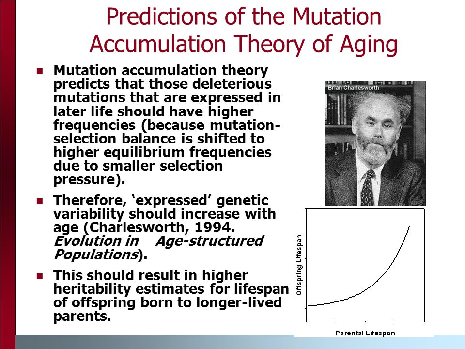 Predictions of the Mutation Accumulation Theory of Aging Mutation accumulation theory predicts that those deleterious mutations that are expressed in later life should have higher frequencies (because mutation- selection balance is shifted to higher equilibrium frequencies due to smaller selection pressure).