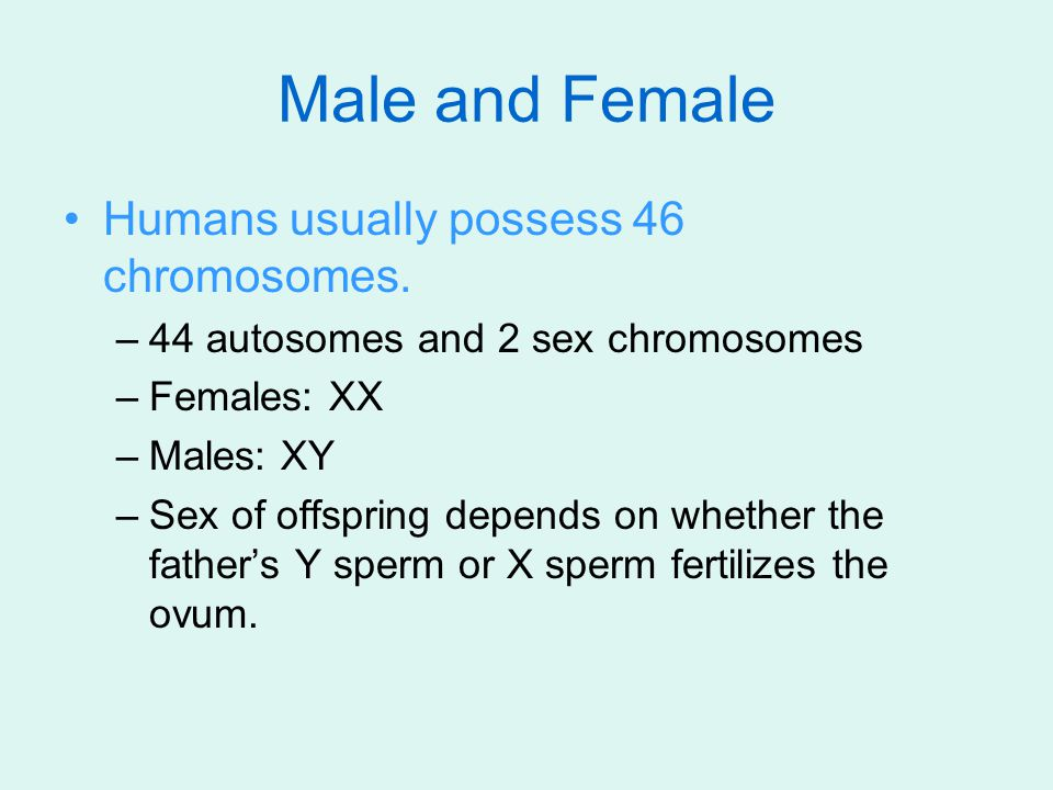 Male and Female Humans usually possess 46 chromosomes. –44 autosomes and 2 sex chromosomes –Females: XX –Males: XY –Sex of offspring depends on whethe
