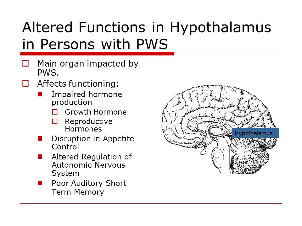 Hypothalamus Altered Functions in Hypothalamus in Persons with PWS  Main organ impacted by PWS.