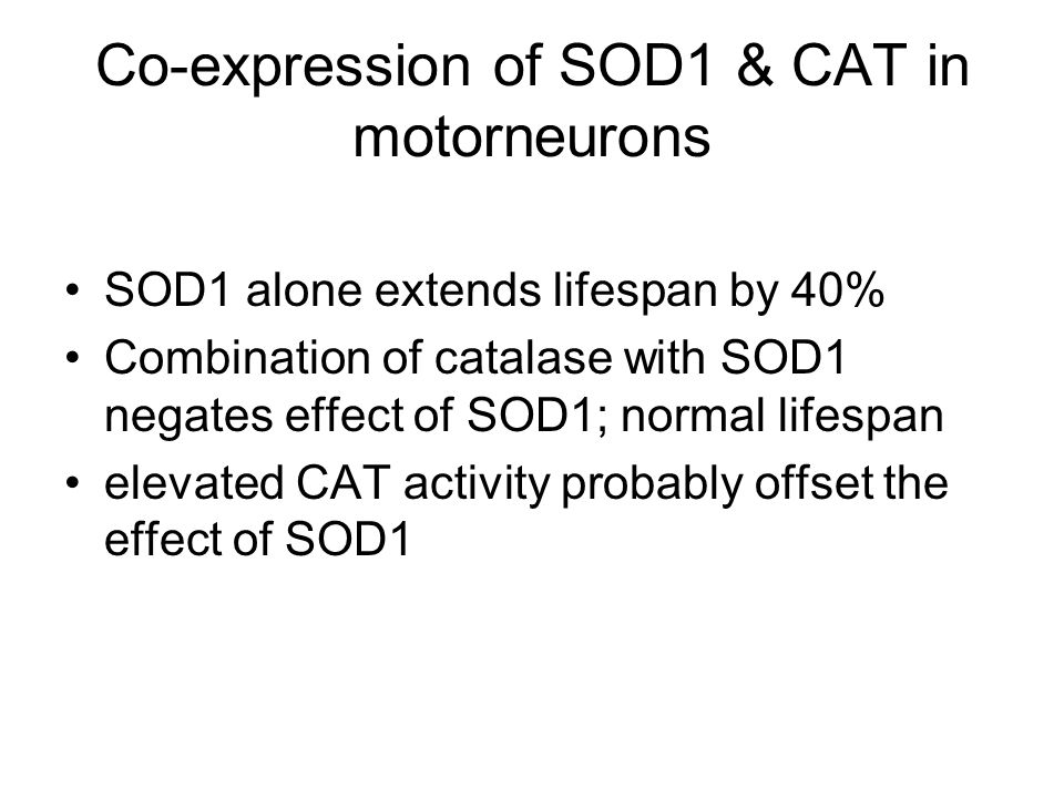 Co-expression of SOD1 & CAT in motorneurons SOD1 alone extends lifespan by 40% Combination of catalase with SOD1 negates effect of SOD1; normal lifespan elevated CAT activity probably offset the effect of SOD1