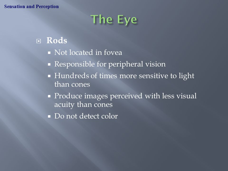  Rods  Not located in fovea  Responsible for peripheral vision  Hundreds of times more sensitive to light than cones  Produce images perceived with less visual acuity than cones  Do not detect color Sensation and Perception