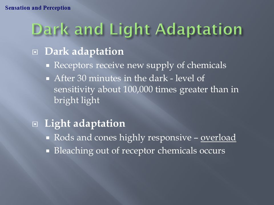  Dark adaptation  Receptors receive new supply of chemicals  After 30 minutes in the dark - level of sensitivity about 100,000 times greater than in bright light  Light adaptation  Rods and cones highly responsive – overload  Bleaching out of receptor chemicals occurs Sensation and Perception