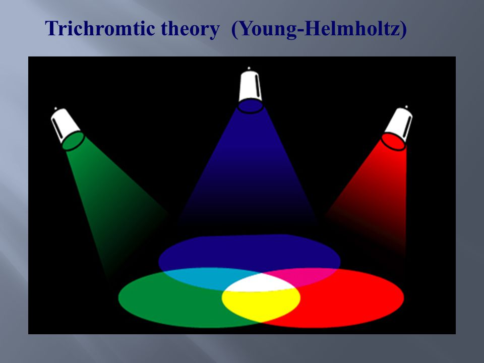 Trichromtic theory (Young-Helmholtz)
