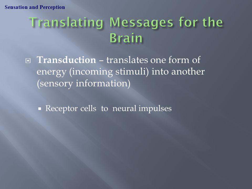  Transduction – translates one form of energy (incoming stimuli) into another (sensory information)  Receptor cells to neural impulses Sensation and Perception