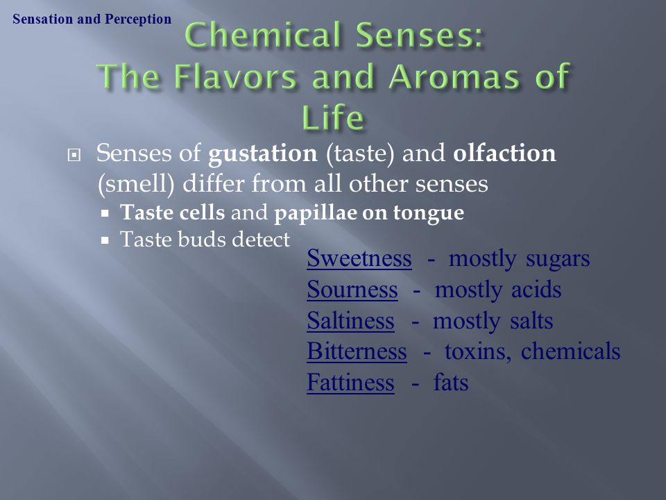  Senses of gustation (taste) and olfaction (smell) differ from all other senses  Taste cells and papillae on tongue  Taste buds detect Sensation and Perception Sweetness - mostly sugars Sourness - mostly acids Saltiness - mostly salts Bitterness - toxins, chemicals Fattiness - fats