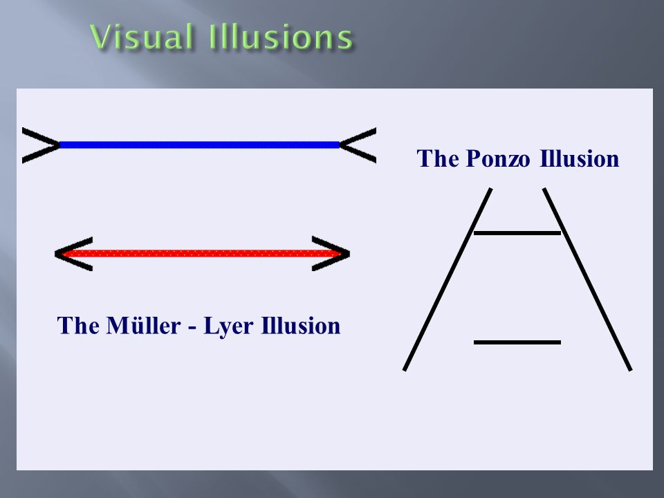 The Ponzo Illusion The Müller - Lyer Illusion