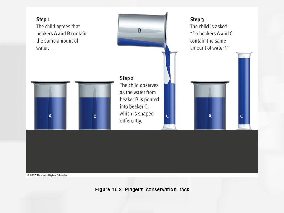 Figure 10.8 Piaget's conservation task