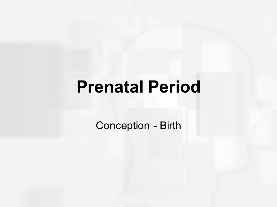 Prenatal Period Conception - Birth