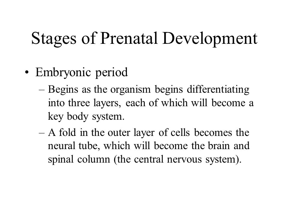 Stages of Prenatal Development Embryonic period –In the fourth week, the cardiovascular system is functioning; the eyes, ears, nose, mouth start to form.