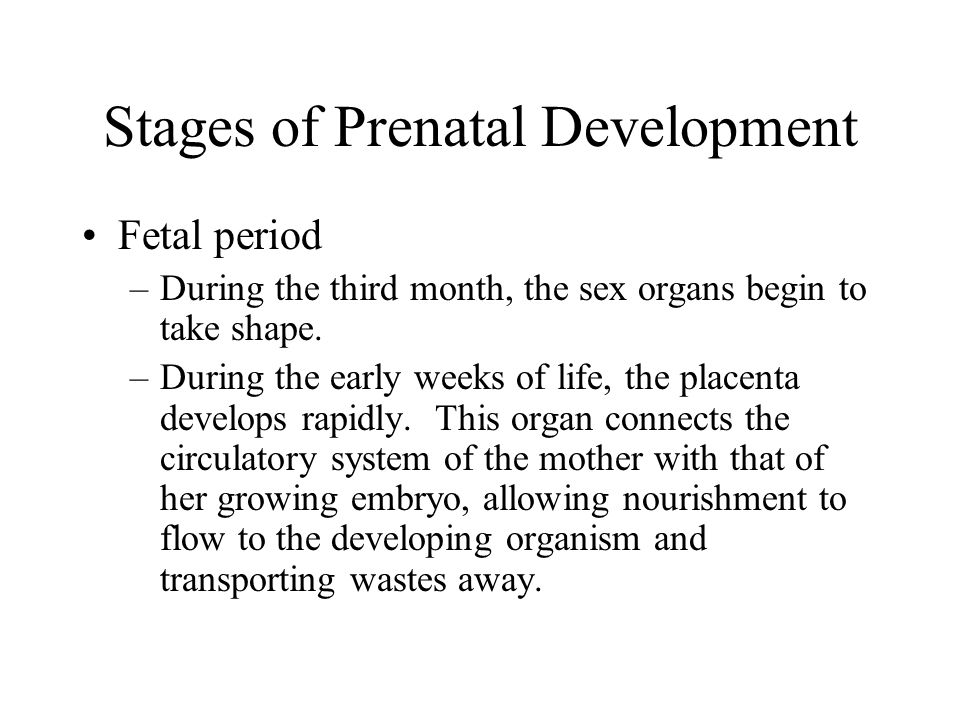 Stages of Prenatal Development Fetal period –During the third month, the sex organs begin to take shape. –During the early weeks of life, the placenta