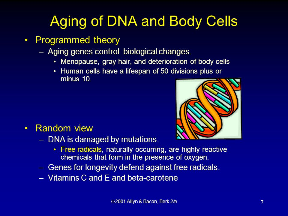  2001 Allyn & Bacon, Berk 2/e 8 Aging of Organs and Tissue Cross-linkage theory –Protein fibers in connective tissue form bonds, or links.