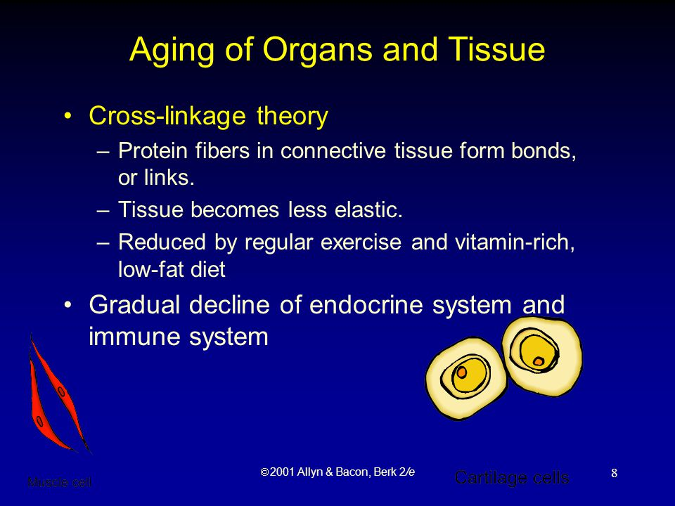  2001 Allyn & Bacon, Berk 2/e 8 Aging of Organs and Tissue Cross-linkage theory –Protein fibers in connective tissue form bonds, or links.