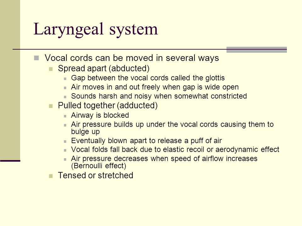 Laryngeal system Vocal cords can be moved in several ways Spread apart (abducted) Gap between the vocal cords called the glottis Air moves in and out freely when gap is wide open Sounds harsh and noisy when somewhat constricted Pulled together (adducted) Airway is blocked Air pressure builds up under the vocal cords causing them to bulge up Eventually blown apart to release a puff of air Vocal folds fall back due to elastic recoil or aerodynamic effect Air pressure decreases when speed of airflow increases (Bernoulli effect) Tensed or stretched