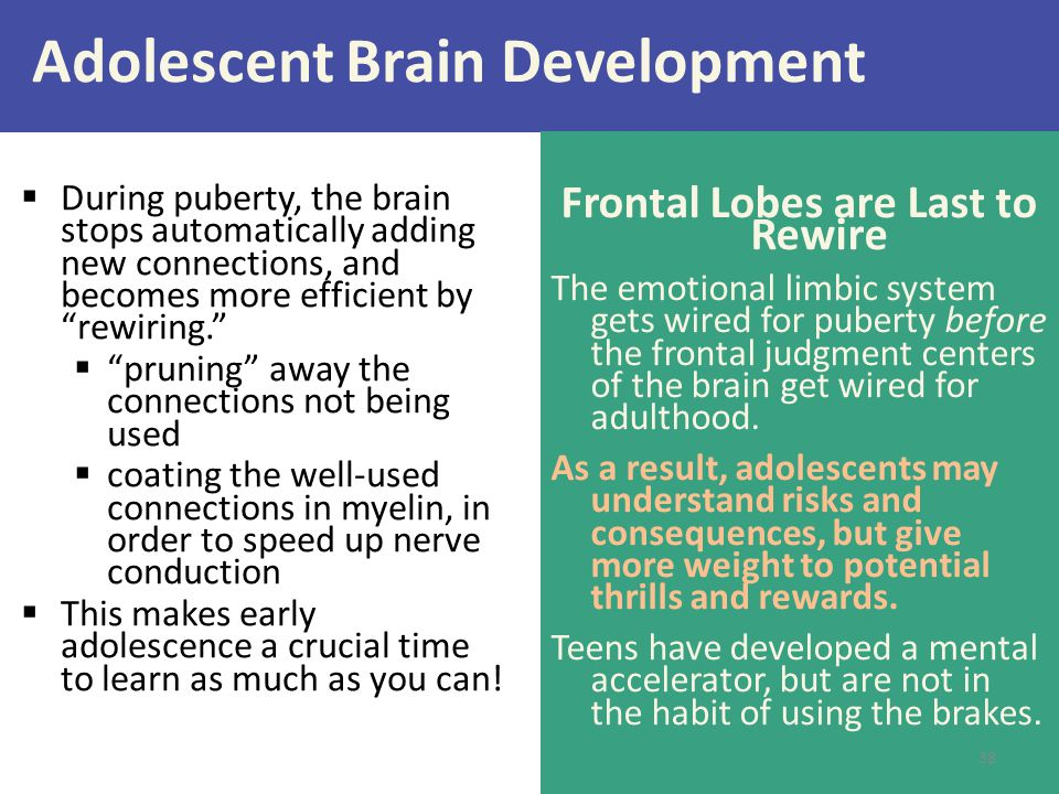 """Adolescent Brain Development  During puberty, the brain stops automatically adding new connections, and becomes more efficient by """"rewiring.""""  """"prun"""