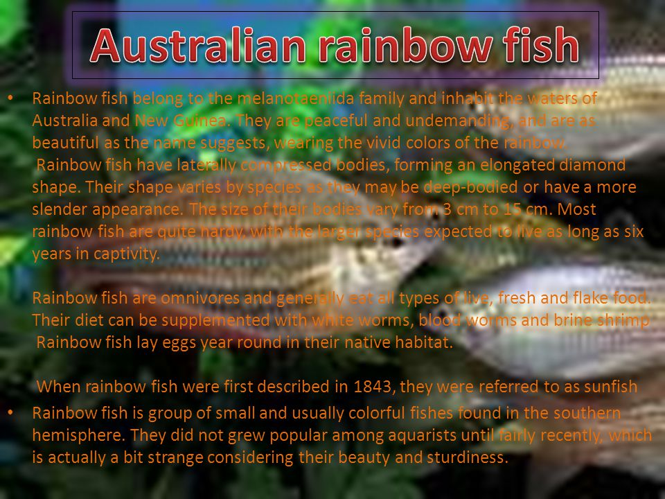 Australian rainbow fish Rainbow fish belong to the melanotaeniida family and inhabit the waters of Australia and New Guinea.