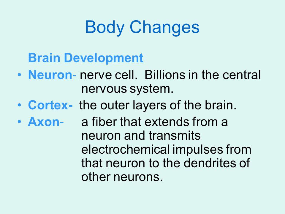 Brain Development Neuron- nerve cell. Billions in the central nervous system.