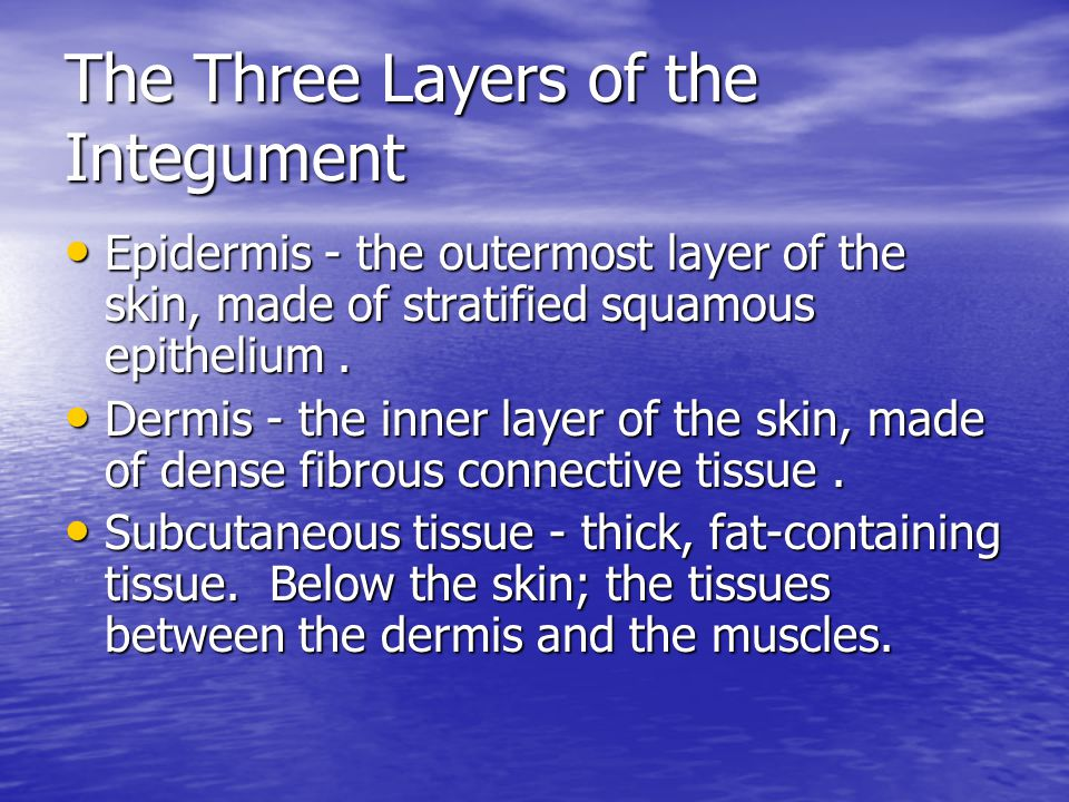 The Three Layers of the Integument Epidermis - the outermost layer of the skin, made of stratified squamous epithelium. Epidermis - the outermost laye