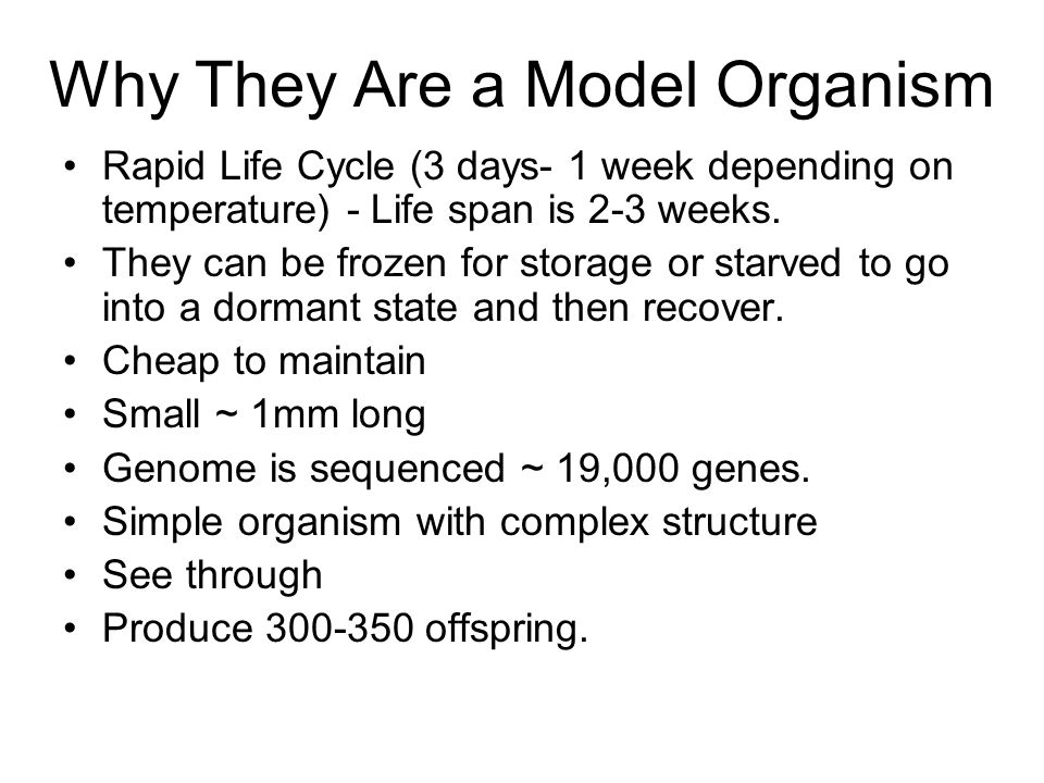 Why They Are a Model Organism Rapid Life Cycle (3 days- 1 week depending on temperature) - Life span is 2-3 weeks.