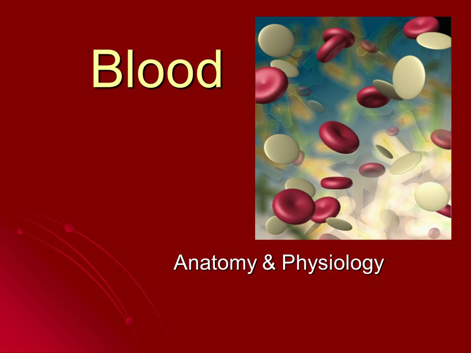 Blood Anatomy & Physiology