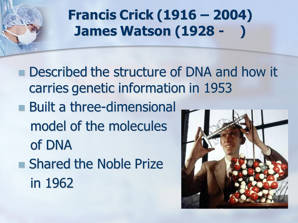 Francis Crick (1916 – 2004) James Watson (1928 - ) Described the structure of DNA and how it carries genetic information in 1953 Described the structu