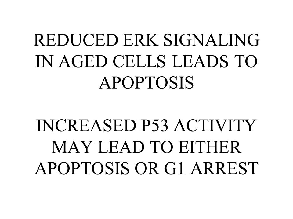 REDUCED ERK SIGNALING IN AGED CELLS LEADS TO APOPTOSIS INCREASED P53 ACTIVITY MAY LEAD TO EITHER APOPTOSIS OR G1 ARREST