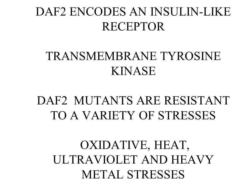 DAF2 ENCODES AN INSULIN-LIKE RECEPTOR TRANSMEMBRANE TYROSINE KINASE DAF2 MUTANTS ARE RESISTANT TO A VARIETY OF STRESSES OXIDATIVE, HEAT, ULTRAVIOLET AND HEAVY METAL STRESSES