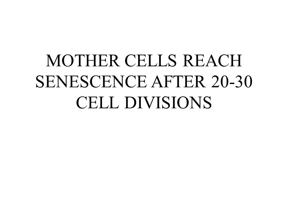 MOTHER CELLS REACH SENESCENCE AFTER 20-30 CELL DIVISIONS
