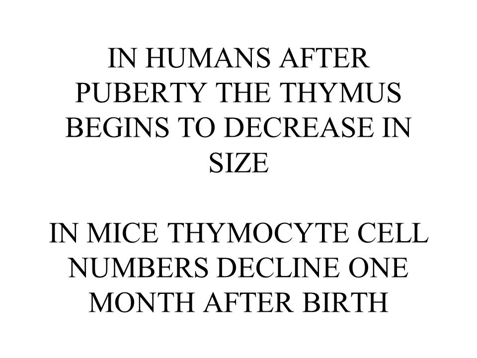 IN HUMANS AFTER PUBERTY THE THYMUS BEGINS TO DECREASE IN SIZE IN MICE THYMOCYTE CELL NUMBERS DECLINE ONE MONTH AFTER BIRTH