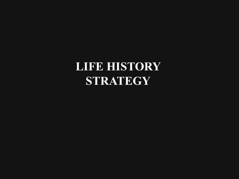 LIFE HISTORY STRATEGY