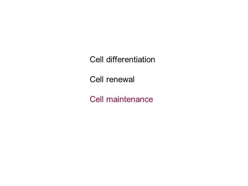 Cell differentiation Cell renewal Cell maintenance