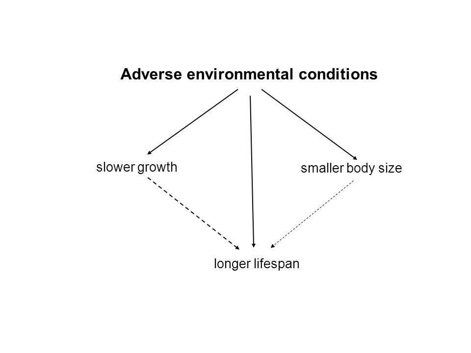 Adverse environmental conditions slower growth smaller body size longer lifespan