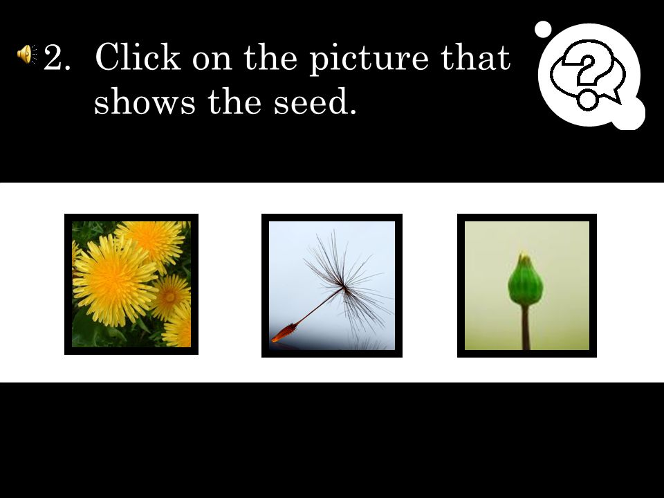 1. Click on the picture that shows the yellow flower.