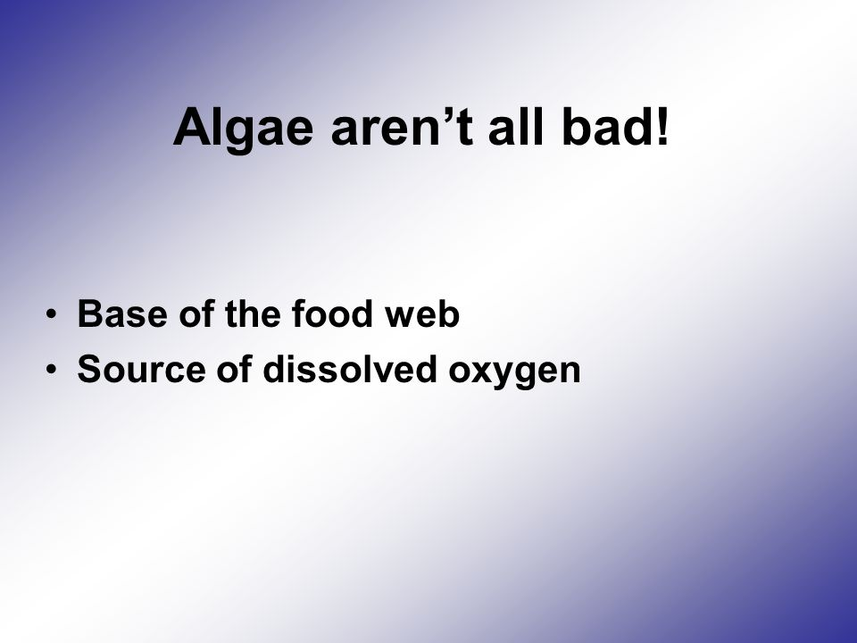 Algae aren't all bad! Base of the food web Source of dissolved oxygen