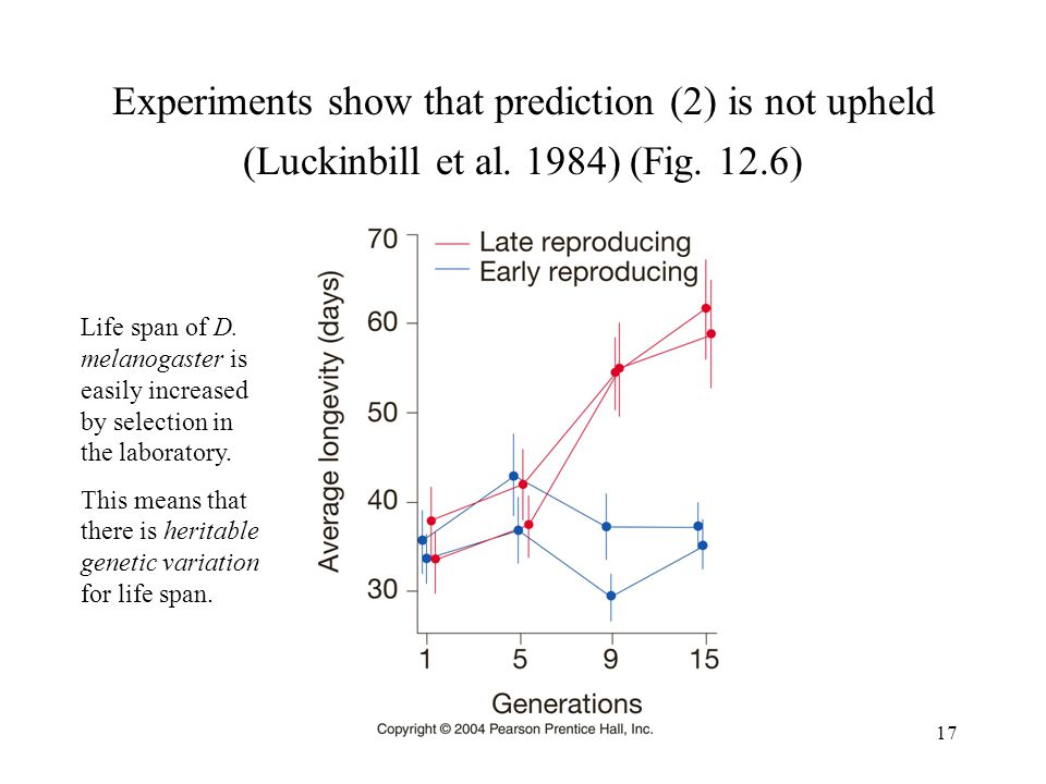 17 Experiments show that prediction (2) is not upheld (Luckinbill et al. 1984) (Fig. 12.6) Life span of D. melanogaster is easily increased by selecti