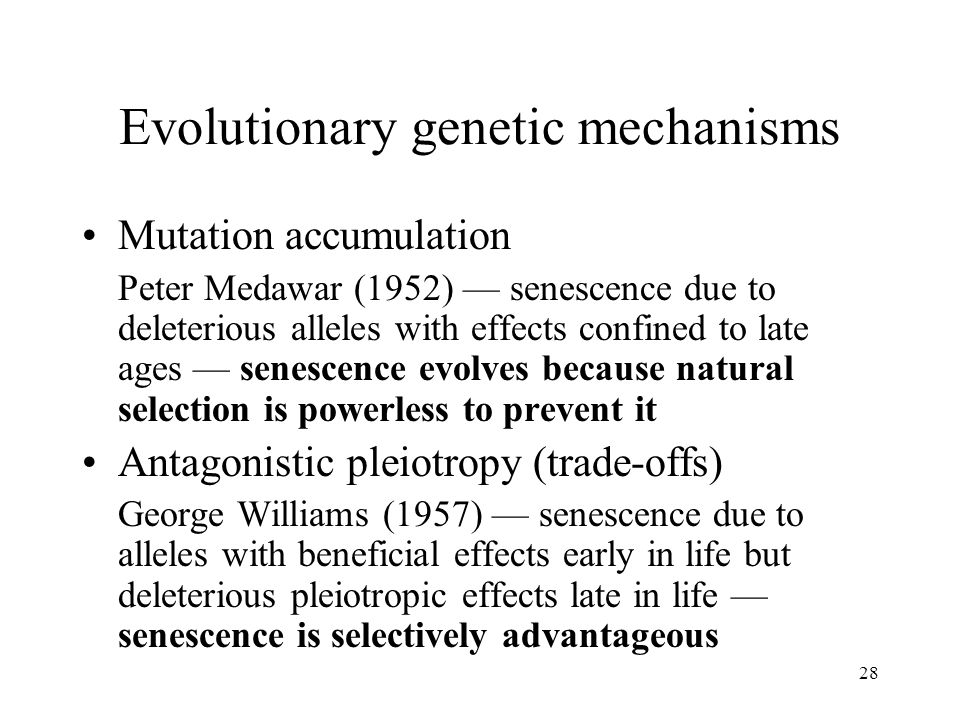 28 Evolutionary genetic mechanisms Mutation accumulation Peter Medawar (1952) — senescence due to deleterious alleles with effects confined to late ag