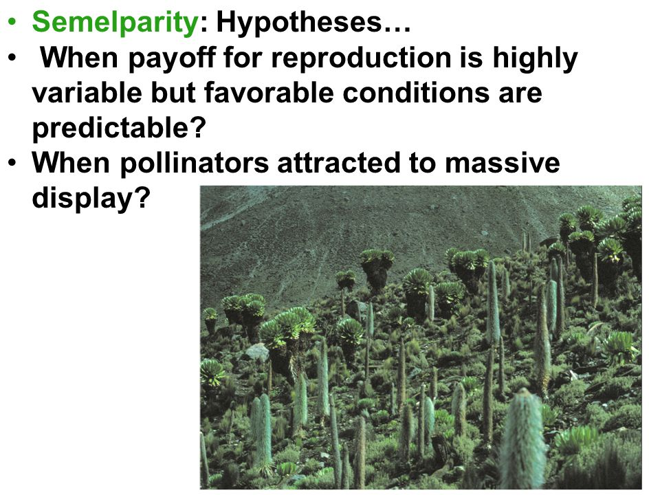 Semelparity: Hypotheses… When payoff for reproduction is highly variable but favorable conditions are predictable.