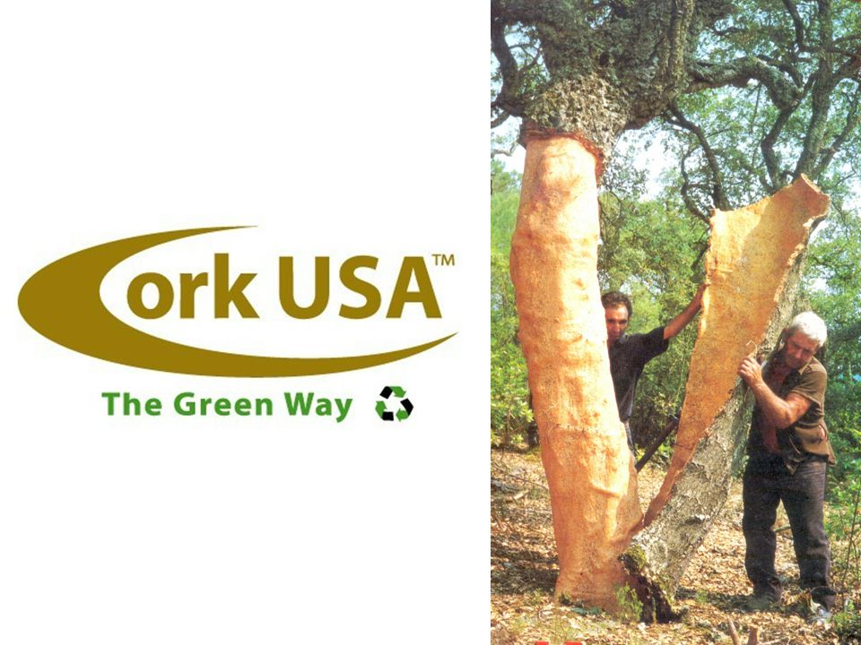 The Cork Forest Cork is an eminently renewable resource harvested from the living bark of the Cork Oak.