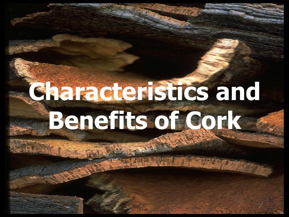 Characteristics and Benefits of Cork