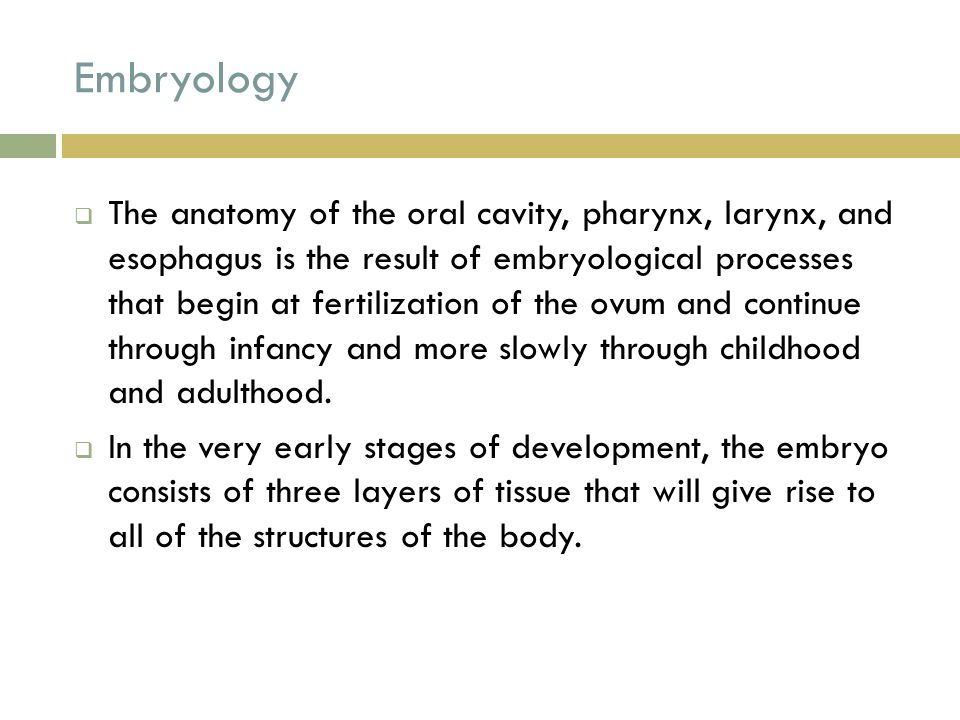 Embryology  The anatomy of the oral cavity, pharynx, larynx, and esophagus is the result of embryological processes that begin at fertilization of th