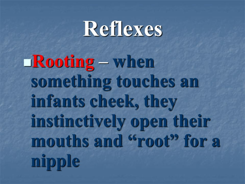 Reflexes Rooting – when something touches an infants cheek, they instinctively open their mouths and root for a nipple Rooting – when something touches an infants cheek, they instinctively open their mouths and root for a nipple