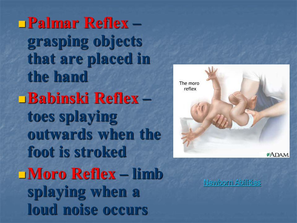 Palmar Reflex – grasping objects that are placed in the hand Palmar Reflex – grasping objects that are placed in the hand Babinski Reflex – toes splaying outwards when the foot is stroked Babinski Reflex – toes splaying outwards when the foot is stroked Moro Reflex – limb splaying when a loud noise occurs Moro Reflex – limb splaying when a loud noise occurs Newborn Abilities Newborn Abilities