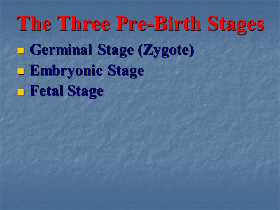 The Three Pre-Birth Stages Germinal Stage (Zygote) Germinal Stage (Zygote) Embryonic Stage Embryonic Stage Fetal Stage Fetal Stage