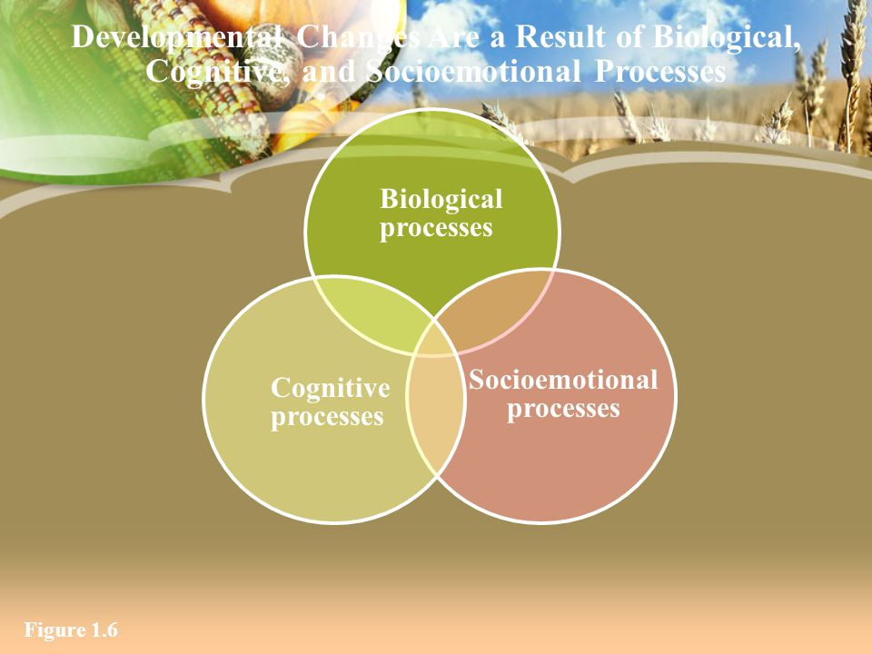 Figure 1.6 Biological processes Socioemotional processes Cognitive processes Developmental Changes Are a Result of Biological, Cognitive, and Socioemo