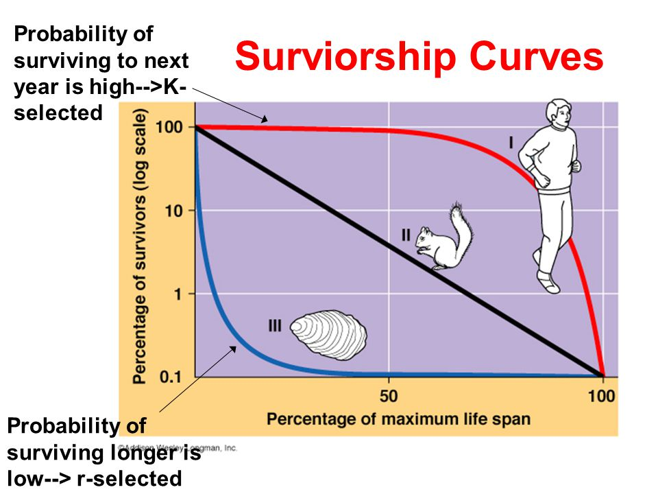 Surviorship Curves Probability of surviving to next year is high-->K- selected Probability of surviving longer is low--> r-selected