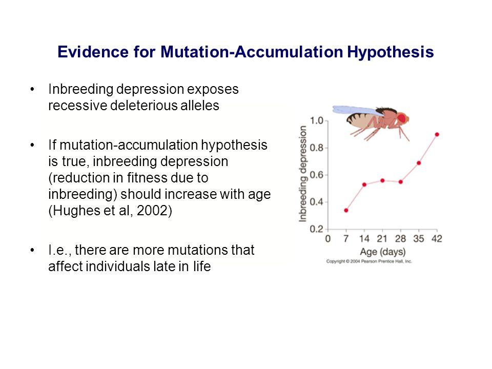 Evidence for Mutation-Accumulation Hypothesis Inbreeding depression exposes recessive deleterious alleles If mutation-accumulation hypothesis is true,