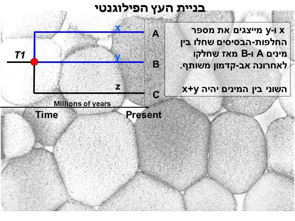 בניית העץ הפילוגנטי x ו-y מייצגים את מספר החלפות-הבסיסים שחלו בין מינים A ו-B מאז שחלקו לאחרונה אב-קדמון משותף. השוני בין המינים יהיה x+y A B C x y T1