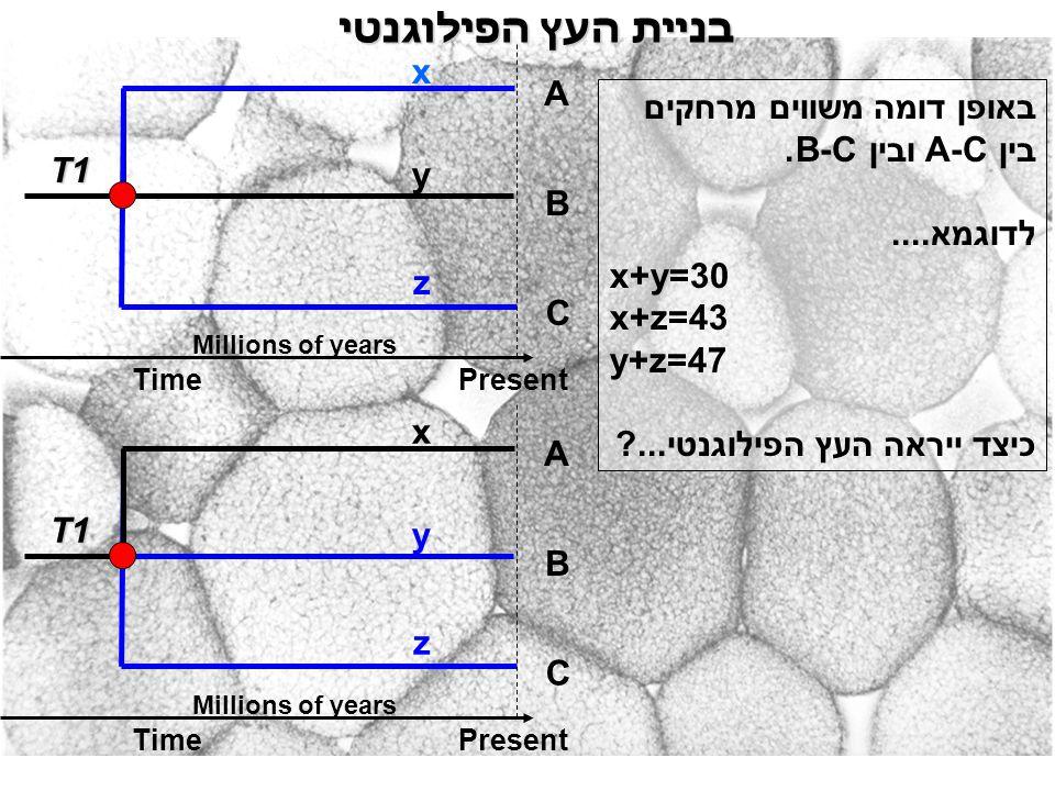 בניית העץ הפילוגנטי באופן דומה משווים מרחקים בין A-C ובין B-C. לדוגמא.... x+y=30 x+z=43 y+z=47 כיצד ייראה העץ הפילוגנטי...? A B C x y T1 PresentTime M